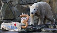 Medvědí hvězda Knut musí být vykastrován, chtějí to ochránci zvířat