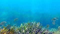 Zachycování oxidu uhličitého může otrávit živočichy v mořích