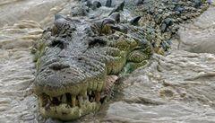 Pětiletá holčička přežila útok dvoumetrového krokodýla