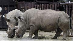 Ve dvorské zoo uhynul vzácný nosorožec bílý
