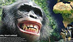 Šimpanz ukousl prst řediteli berlínské ZOO