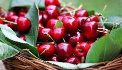 Ovoce bude málo kvůli špatnému počasí, třešně možná vůbec