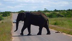 Ekonomové a sloni aneb proč by měl stát začít prodávat kly