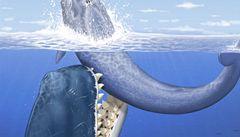 Vědci v Peru objevili pravěkou velrybu s téměř půlmetrovými zuby