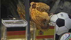 Chobotnice Paul je v kurzu. Už se objevil i podvrh jejího 'tipu'