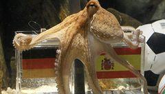 TIME OUT LN: Chobotnice Paul je obyčejný tupec