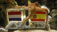 Španělé milují věšteckou chobotnici. Titul jim předvídá i želva LN