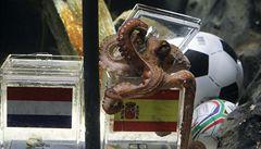 Médium, nebo šarlatán? Američané znají pravdu o chobotnici Paulovi