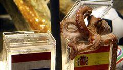 Slavná věštící chobotnice Paul, symbol fotbalového mistrovství, zahynula