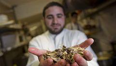 Izraelští rabíni se přou o to, jestli jsou kobylky košer