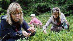 V části Krkonoš platí omezení vstupu kvůli sběračům borůvek