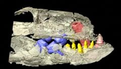 Vědci objevili v Tanzanii zkamenělinu krokodýla s přežvýkavými zuby