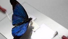 Vědci v USA vytvořili umělou kůži, která cítí dotyk motýla