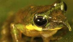 Nosatá žabka či oranžový pavouk. Vědci objevili nové druhy flóry a fauny