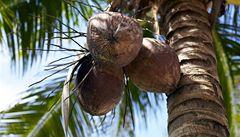 Zkuste kokosovou vodu. Pomůže ke štíhlé linii