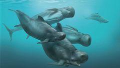 Nizozemec šel na ryby a vylovil fosílii prehistorického delfína