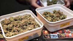 Nizozemská vláda chystá zákaz prodeje marihuany cizincům