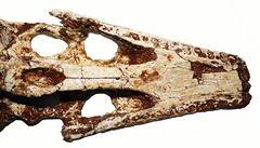 V Thajsku objevili dosud neznámý druh prehistorického krokodýla
