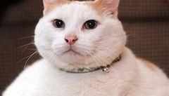 Zemřela dvacetikilová kočičí celebrita Prince Chunk