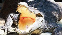 Strážníci jeli k nálezu uhynulé ještěrky, našli mrtvého krokodýla