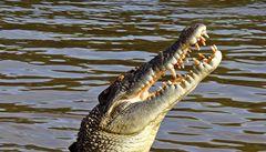 Golfistu v australském turistickém středisku pokousal krokodýl
