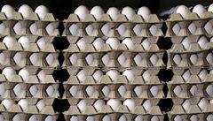 Slovenští veterináři našli jedovatý fipronil u vařených vajec z Česka