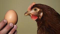 Velikonoce bez vajec? Slepičí krize zasáhla EU