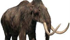 Mamuti nepatří jen do minulosti, tvrdí Japonci a chystají se je klonovat