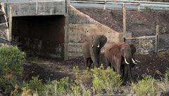 Sloni v Keni už mají svoje podchody. Zabrání srážkám aut se zvířaty