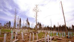 Nejvyšší soud zrušil plán péče o národní park Šumava