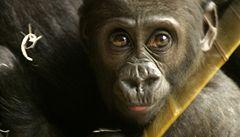 Pražská zoo vybírá nové logo, podívejte se na pět nejlepších návrhů