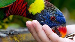 Vězni v JAR pečují o ptáky, rozněžní i drsňáky