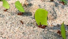 Mravenčí důchodci přenechají práci mladým