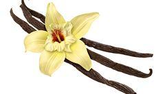 Čeští botanici objevili ve Vietnamu nový druh vanilky