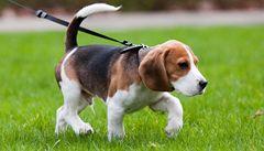 Jakou má váš pes náladu? Poznáte to podle směru vrtění ocasu