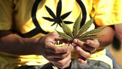 Lékaři žádají legalizaci konopí pro léčbu nemocí