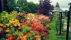 Rozkvetlé Vánoce v Liberci: botanická zahrada láká na kamélie