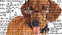 Pes vidí svět jako zdroj zázraků