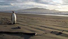 Ortodoxní léčba narkomanů a operovaný tučňák