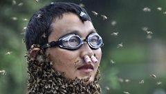 Odvážný včelař na sebe přilákal 26 kilo včel