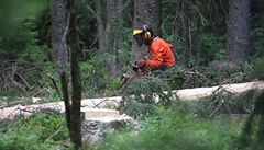 Proti kůrovci. Slovenští lesníci podpořili kácení