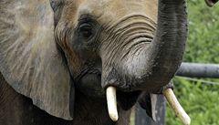 V indonéské zoo se narodil ohrožený slon indický sumaterský