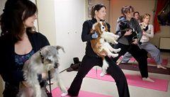 Psí jóga se jmenuje doga. Zmírní agresivitu