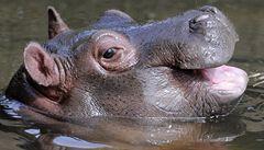 Pražská zoo chystá novou expozici Amazonie