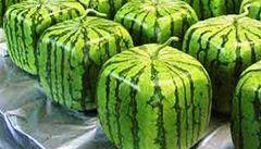 Hranaté melouny a další podivné superplodiny