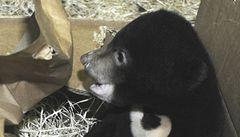 Švýcarská zoo usmrtila a vycpala zdravé medvídě. Chce ho ukazovat dětem