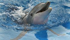 Blamáž s delfíny v Praze možná skončí dobře. Cirkus lidem vrací peníze