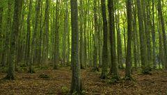 Kanadské lesy ničí lýkohub, který otepluje ovzduší