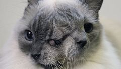 V USA žije dvouhlavá kočka, je jí 12 let