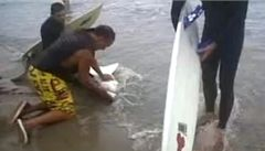 Surfaři zachránili mládě žraloka 'lidožrouta'